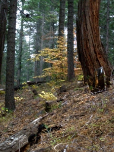 yosemite creek, fall , Oct 18, 2009, kathryn arnold
