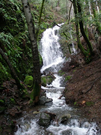 Uvas Canyon, waterfall, January 24, 2010