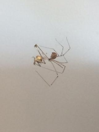 Spider suspended